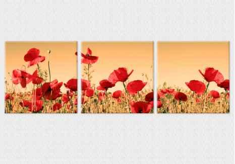 Multi Tablouri Maci rosii