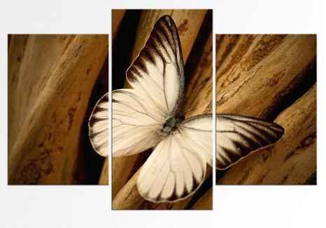 Set - Fluturas