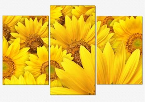 Set - Flori de soare