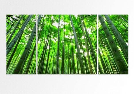 Padure de Bambusi